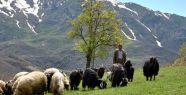 Kalp ve damar hastalıklarına keçi eti