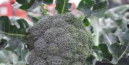 Kemiklerim Sağlam Olsun Diyorsanız Brokoli...