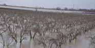 Menderes Nehri taştı, ekili alanlar su altında kaldı