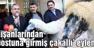 PTT çalışanlarından 'kuzu postuna girmiş çakallı' tepki