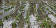 Tarımsal kredi borçlarına erteleme...