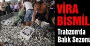 Trabzon'da Balık Sezonu Açıldı