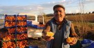Üretici portakalı dalında çürümemesi için