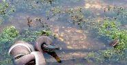 Yılan ile timsahın ölümcül savaş