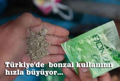 Türkiye'de  bonzai kullanımı hızla büyüyor...