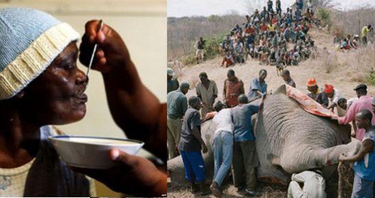 Zimbabve'de 1,6 milyon kişi aç